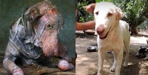 Abandoned On The Side Of The Road With The Worst Case Of Mange They Had Seen [BEFORE & AFTER]