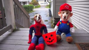 10 Dogs Who Love Tricks And Treats For Halloween