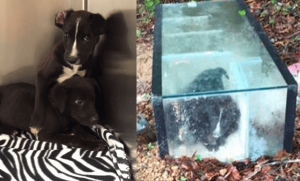 Puppies Left To Die Sealed In Aquarium
