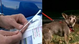 Company DNA Tests Dog Poop To Find Owners Who Don't Scoop