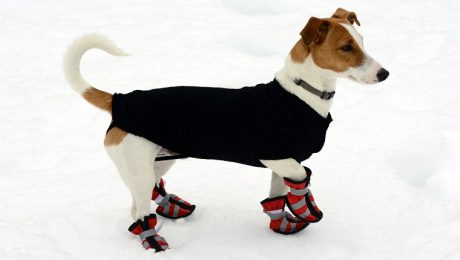 Tips For Walking Dogs In The Snow