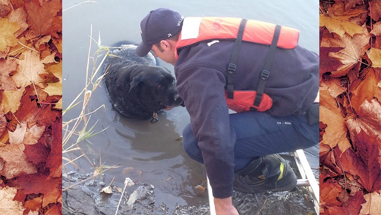 A firefighter stands on a ladder in the water and pets a black lab up to his chest in the mud.