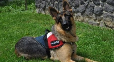 Gabriel The Service Dog: A Gift From A Fallen Soldier