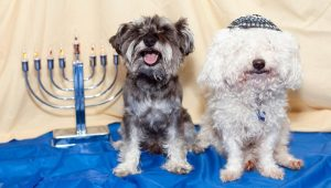 20 Dogs Who Are Ready For Hanukkah