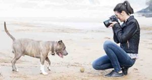 How To Take The Best Pictures Of Your Dog