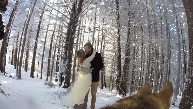 A couple kisses in snowy woods. The camera is positioned on their dog's back.