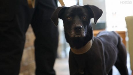 Rescued Shelter Dog Added To Iowa Police K-9 Unit
