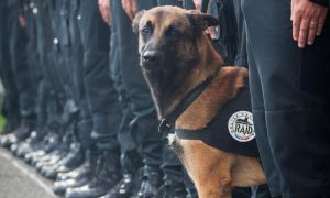 French Police Dog Named Diesel Killed In Terrorist Raid