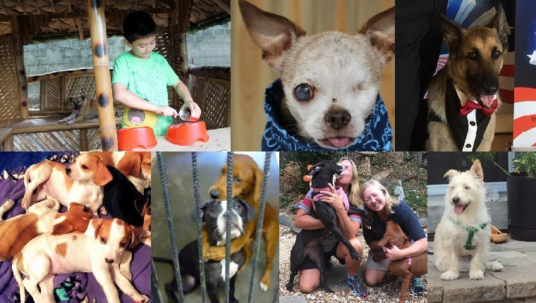10 Dog Rescue Groups That Made A Difference In 2015 Dogtime