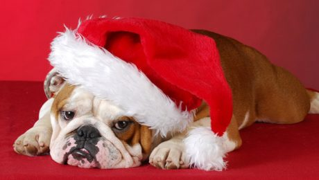 25 Dogs Who Are Staying Up All Night To See Santa [PICTURES]