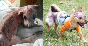 Puppy Burned And Dropped 4 Stories For Chewing Phone Inspiring Recovery
