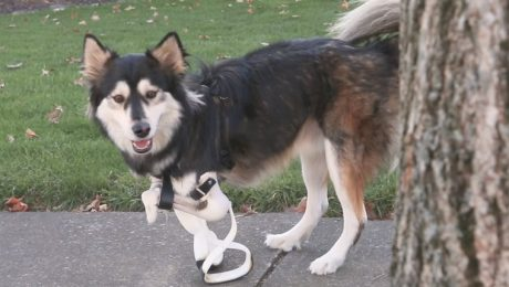 Update: Derby The Dog's 3D Printed Legs Get Even More Awesome