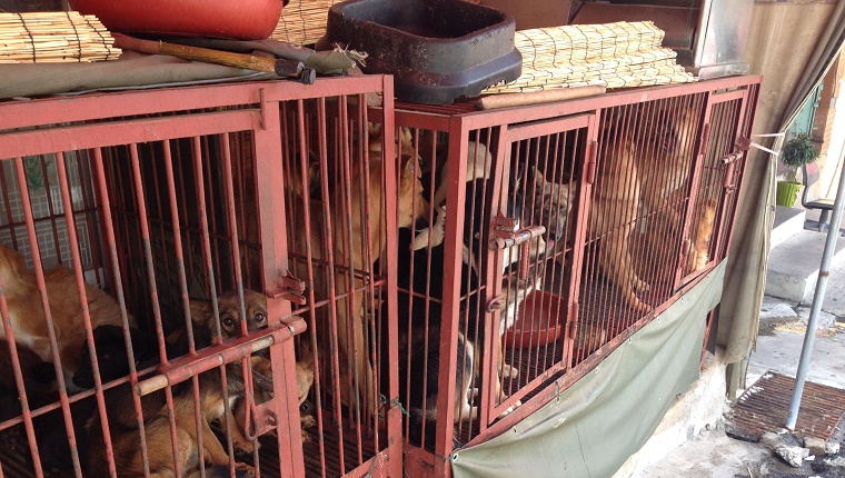 Several dogs are packed together in small cages.