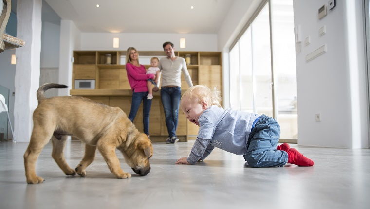 A toddler crawls on a kitchen floor next to a dog. His family is watching in the background.