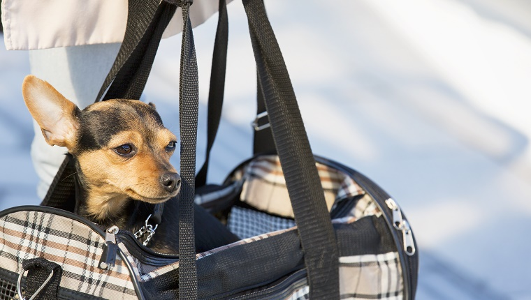 A woman carries a small dog in a dog carrier.