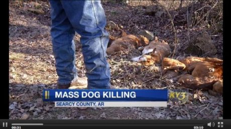 Arkansas Mass Dog Killing: 57 Dogs Found Murdered In Arkansas Forest