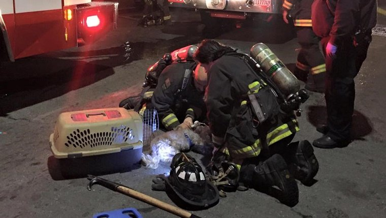 Two firefighters kneel next to an unconscious dog on the pavement in front of firetrucks.