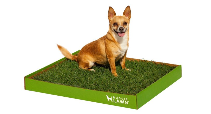 10 Best Gift Ideas For Your Small Dog Or People With Small Dogs ...