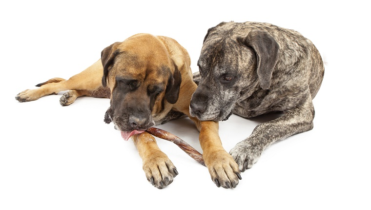 Two Mastiff share a dog treat.