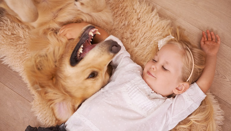 A little girl lies on the floor with her arm around a smiling Golden Retriever.