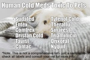 WARNING: Some Human Cold And Flu Meds Are Deadly For Pets