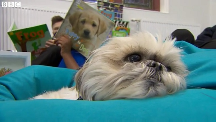 Maggie the Shih Tzu sits on a bean bag chair while students read near her.