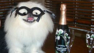 21 Dogs Ready To Celebrate And Ring In The New Year [GALLERY]
