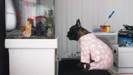 Dog Spends Entire Weekend Staring At A Fish Tank And Refuses To Look Away