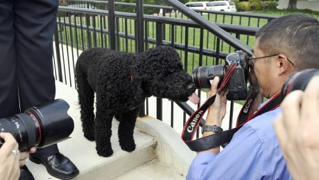 Obama's Dog Won't Stop Pooping In The White House
