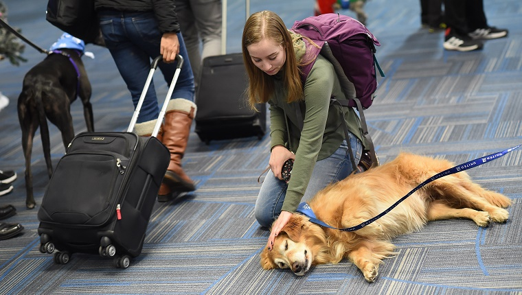 A woman kneels and pets a Golden Retriever in an airport terminal.
