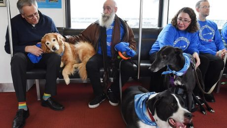 United Airlines Sends 200 Comfort Dogs To Airports To Help Stressed Travelers