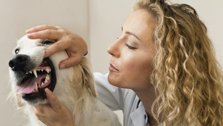 Proper Dental Care Can Help Your Dog Live A Longer, Healthier Life