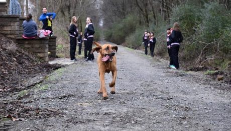 Dog Accidentally Runs Half Marathon – Comes In Seventh Place