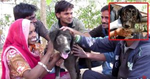 Kalu: The Dog Who Grew A New Face [WARNING: GRAPHIC]
