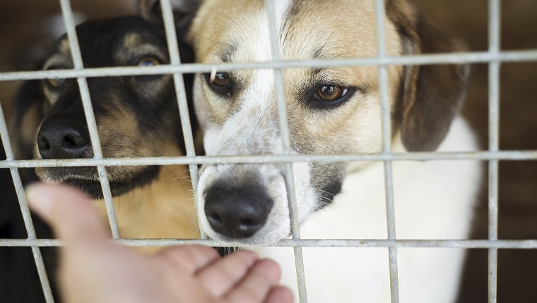 Two dogs sit in a kennel and sniff a human's hand through the cage.