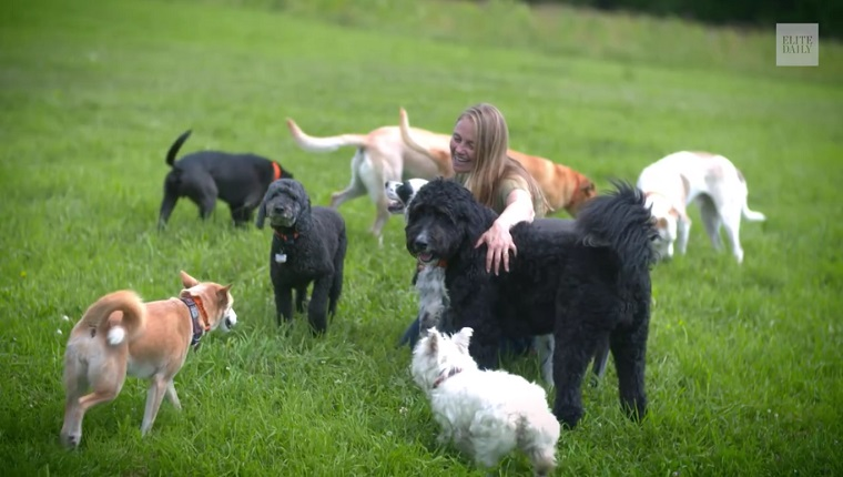 Eva sits in a grassy field with a pack of 9 dogs.