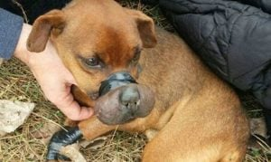 2 Years In Federal Prison For Animal Abuser Who Taped Dog's Mouth Shut And Left It To Die