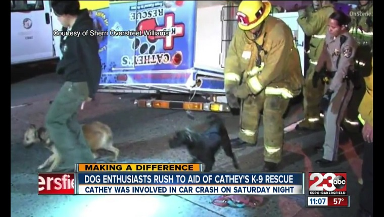 A firefighter and a civilian try to round up dogs who are running on the road.
