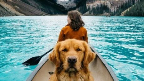 Aspen The Mountain Pup Hikes His Way Into The Internet's Heart