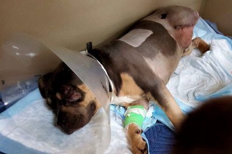 Dog Hit By 13 Trains Is A Living Miracle – Amazing Story Of Survival