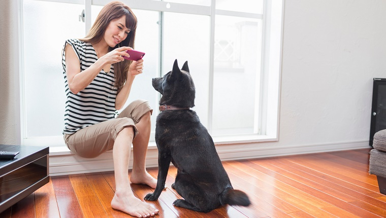 A woman takes a picture of a black dog with her cell phone.