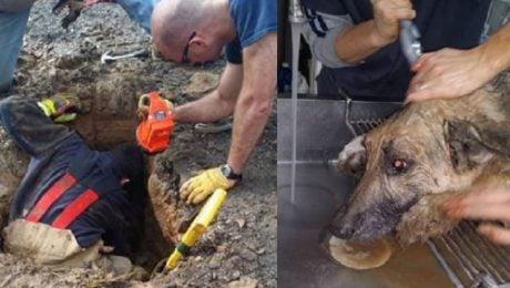Dog Survives Being Buried Alive For 72 Hours In A Sinkhole