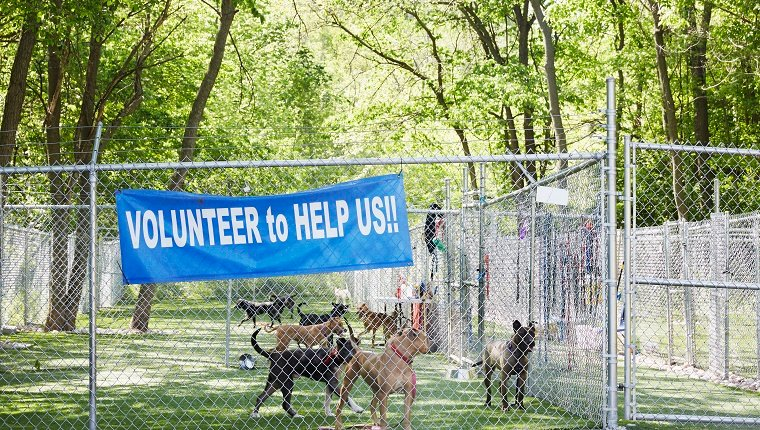 "Several dogs stand in a fenced-in outdoor area with a sign that reads ""Volunteer to help us."""