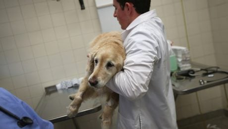 Flint Michigan Water Crisis: Dogs Testing Positive For Lead Toxicity