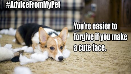 #AdviceFromMyPet Trends On Twitter–Here Are Some Of Our Favorites!