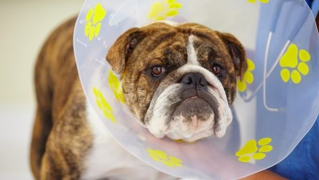 Spay/Neuter Awareness Month: The History Of Spaying And Neutering Pets
