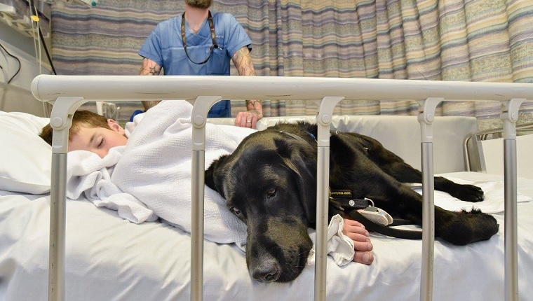 service-dog-comforts-autistic-boy-hospital