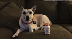 PL360 Anxiety Relief For Dogs Review