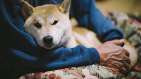When To Say Good-bye To Your Dog