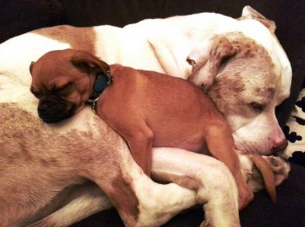 100 lb. Dog Comforts Small Foster Dogs [PICS]